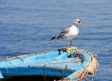 Seagull z usta otwartym na łodzi obraz stock