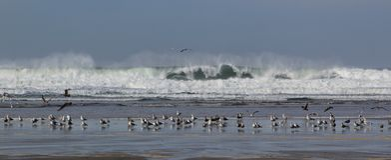 Seagull zgromadzenie Zdjęcia Royalty Free