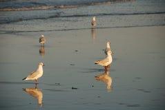 seagull zmierzch obrazy stock