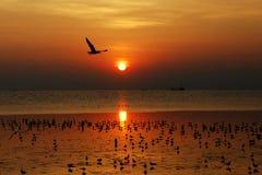seagull zmierzch Zdjęcia Royalty Free