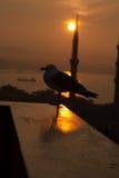 Seagull zmierzch Zdjęcie Stock