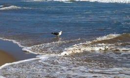 Seagull at Zuma Beach Royalty Free Stock Photography