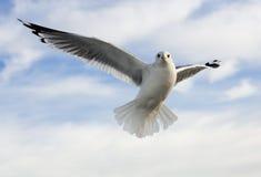 Seagull01 Royalty-vrije Stock Foto