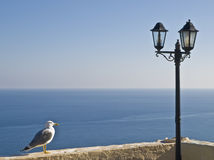 Seagulland Lamppost Royalty Free Stock Photography