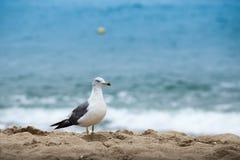 Seagullanseende på en sandstrand Fotografering för Bildbyråer