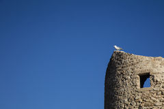Seagullanseende på ett forntida torn Arkivbild