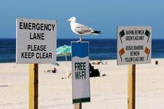 Seagullanseende på ett fritt tecken wi-fi Royaltyfri Foto