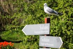 Seagullanseende på ett riktningstecken royaltyfri foto