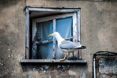 Seagull i fönster Royaltyfria Bilder