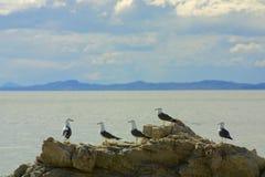 seagullberättelsetid Royaltyfri Bild