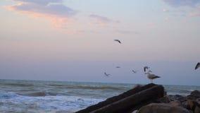 Seagullen flyger över vattnet Fiskmåsfluga över havet Fågelfluga över havet Folkmatningsfåglar på - - fluga hungriga attackfåglar lager videofilmer