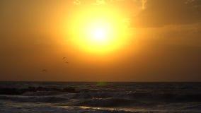 Seagullen flyger in i himlen in mot solen Solnedgångultrarapid lager videofilmer