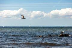 Seagullen flyger nära stranden över havet arkivfoto