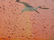 Seagullen på en rosa bakgrund med regn tappar Abstrakt målningSeagull och droppar Royaltyfri Fotografi