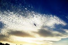 Seagullen på himlen i sommar, guld fördunklar Royaltyfria Foton