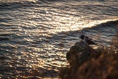 Seagullen på stenen Royaltyfria Foton
