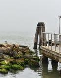 Seagullen på vaggar och bron Arkivbilder