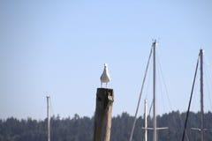 Seagullen postar på Arkivbilder