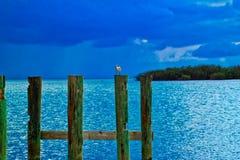 Seagullen sätta sig på trästolpen av pir som sticker ut ut i havet på sombrerostranden Arkivfoton