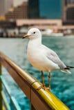 Seagullen sitter på en ledstång Arkivfoto