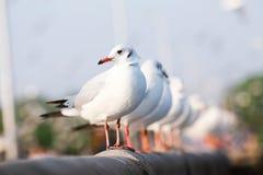 Seagullen står på en stång för vitt cement för bro ovanför havet, royaltyfria bilder