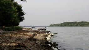 Seagullen strosar längs stranden arkivfilmer