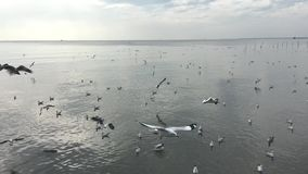 Seagullflyg, fyndmat inget ljud arkivfilmer