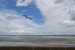 Seagullflyg i framdel av det Mont helgonet Michel Island i Frankrike Arkivfoton