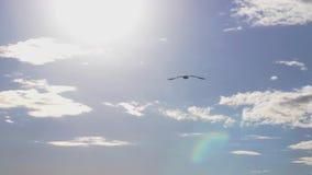 Seagullflyg i havet Härlig sol över havet, solsignalljus långsam rörelse 1920x1080 lager videofilmer