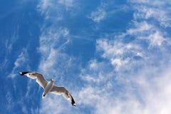 Seagullflyg i Yhe himmel Arkivbild