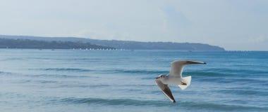 Seagullflyg på havskust Arkivbild