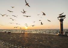 Seagullflyg på himmel över sjögarda royaltyfri fotografi