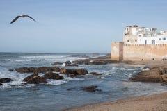 Seagullflyg på kusten Fotografering för Bildbyråer