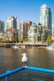 Seagulll tyczenie na strażowym poręczu przed Yaletown, Vancouver Zdjęcia Stock