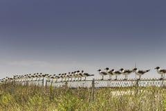 Seagulllinje Fotografering för Bildbyråer
