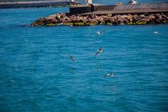 Seagulls är på och över havsvatten fotografering för bildbyråer