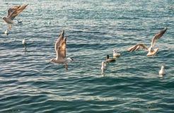 Seagulls är på och över havsvatten royaltyfria bilder