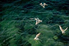 Seagulls är på och över havsvatten royaltyfri foto