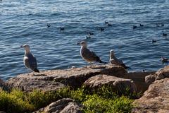 Seagulls är på vagga vid havsvatten royaltyfri foto