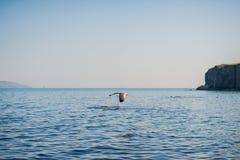 Seagulls äter smällare Royaltyfri Foto