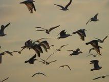 Seagulls στο ηλιοβασίλεμα στοκ φωτογραφία με δικαίωμα ελεύθερης χρήσης