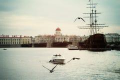Seagulls över Neva River Royaltyfria Bilder