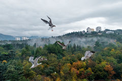Seagulls över parkerar Arkivbild