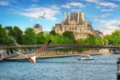 Seagulls över Seine Royaltyfria Bilder
