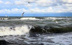 Seagulls över vattnet Arkivfoton