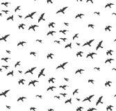 Seagulls άνευ ραφής σχέδιο σκιαγραφιών Κοπάδι του gra πουλιών πετάγματος Στοκ Φωτογραφίες