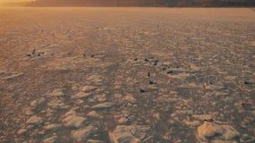 Seagulls αιωρούνται στον ουρανό πέρα από τον παγωμένο ωκεανό στο ηλιοβασίλεμα κίνηση αργή Droneshot απεικόνιση αποθεμάτων