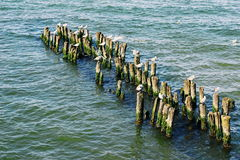 Seagulls αναμονή Στοκ φωτογραφία με δικαίωμα ελεύθερης χρήσης