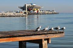 seagulls αποβαθρών Στοκ φωτογραφίες με δικαίωμα ελεύθερης χρήσης