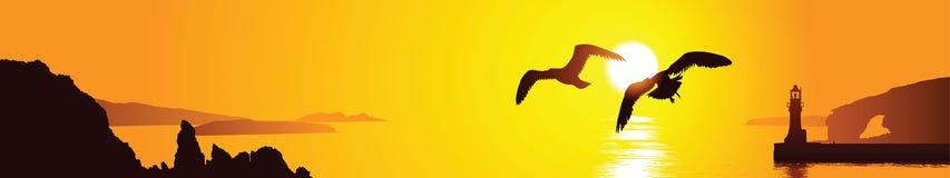 seagulls δύο Στοκ Εικόνες